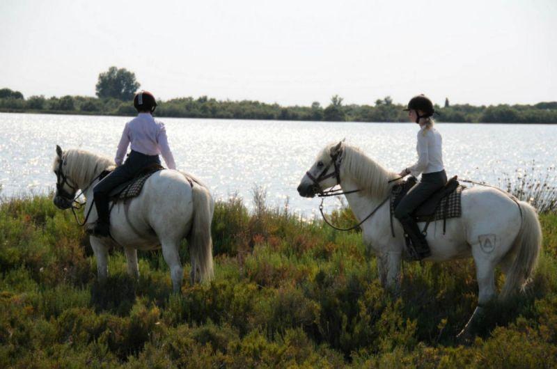 balade-a-cheval-marais-auberge-cavaliere-du-pont-des-bannes-camargue