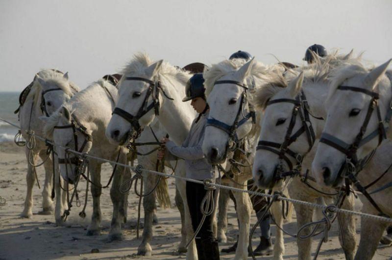 balade-cheval-plage-auberge-cavaliere-du-pont-des-bannes-camargue