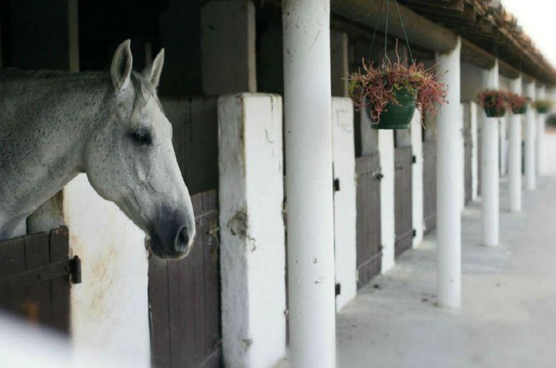 ecuries-cheval-auberge-cavaliere-du-pont-des-bannes-camargue